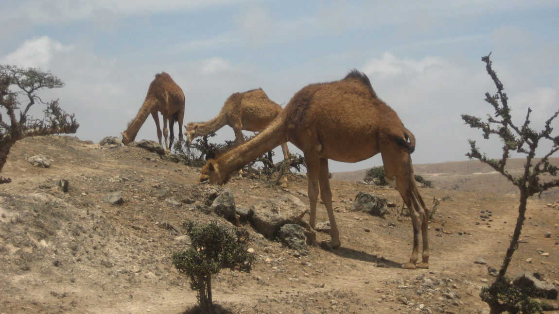 OMAN – Wüste, Kultur und Baden