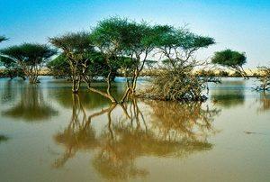Mangrovenwald von Al Thakira