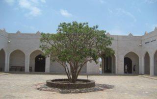 Weihrauchbaum vor dem Museum