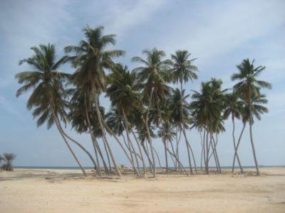 Traumhafter Palmenstrand